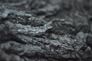 textura de madera. macro foto