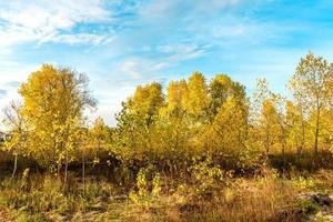 Hermosos árboles con follaje de color amarillo brillante contra un cielo azul foto