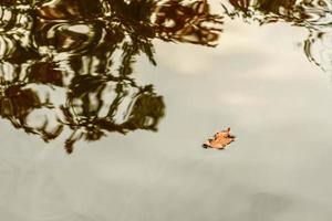 A small orange leaf that fell from a tree to a flat line of water photo