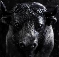 The figure of a bull made of soap as a gift photo