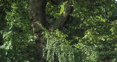 fondo de bosque o bosque foto