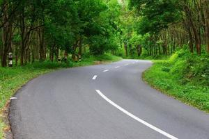 Beautiful road and tree view photo
