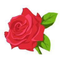 Rose Flower color clip art Design vector
