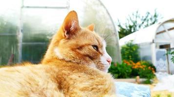 Cute portrait of a domestic tabby cat photo