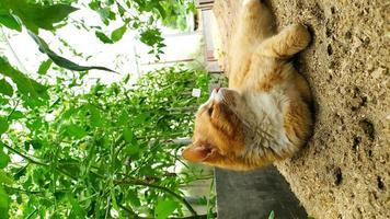 el gato yace en el invernadero foto