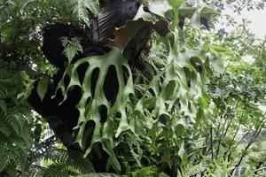 Tropical green surroundings in outdoor garden photo