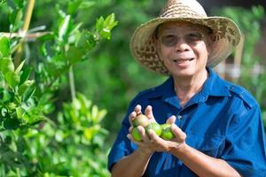 senior asian farmer holding lime fruits in farm photo