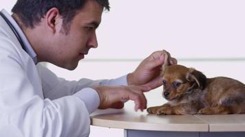 Veterinarian giving puppy a checkup video