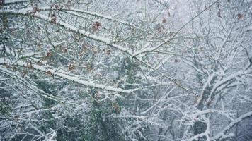 branches dans la tempête de neige video