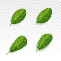 Realistic leafs collection set with white tranparant background vector