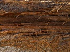 Abstract texture of old wood formed by time and nature photo