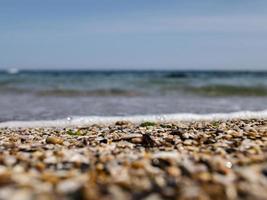 sea pebbles and seashells photo
