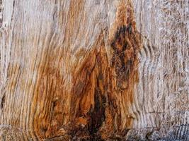 Old natural wooden shabby background close up photo