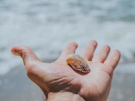 White Seashell In Male Hand On A Background Of Water photo