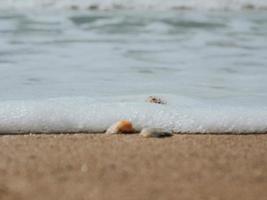 Beautiful Seashells In The Sand On The Sea Coast Or Ocean photo