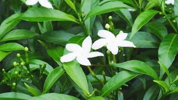 white flower video background