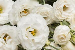 The arrangement beautiful flowers background photo
