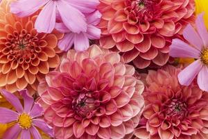 The composition beautiful flowers background photo