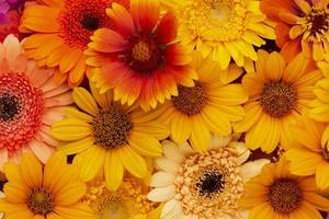 la composición hermosa flores de fondo foto