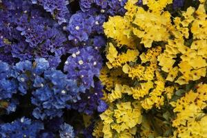 The assortment beautiful flowers background photo