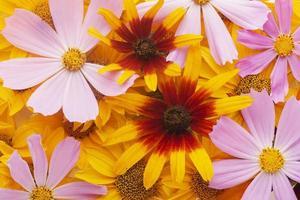 el hermoso arreglo de flores de papel tapiz foto