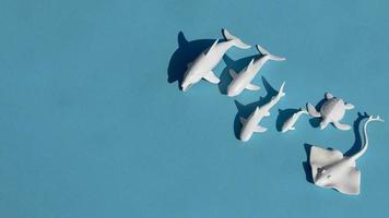 Top view marine animals arrangement photo