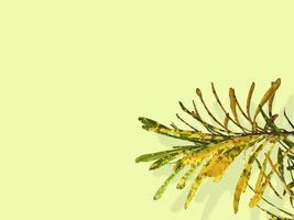 Codiaeum variegatum or puring plant photo