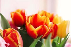 un ramo de tulipanes rojos y amarillos foto
