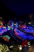 Christmas Lights at Butchart Gardens photo