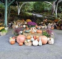 Thanksgiving Pumpkins and Gourds photo