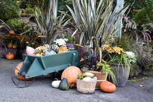 A Wheelbarrow full of Pumpkins and Gourds photo