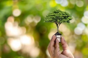 Tree growing in light bulb on green nature bokeh background, green energy concept for environment and conservation of earth ecology concept. photo