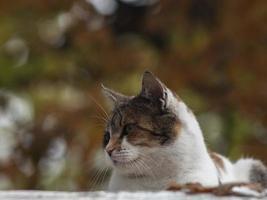 gato manchado de la calle en la calle del otoño foto