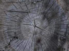 hermoso tocón de madera seca. Textura de madera agrietada en tocón de arce foto
