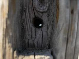 Beautiful natural dry tree trunk with hole. wooden background photo