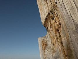 beautiful dry tree trunk against the blue sky.wooden structure photo