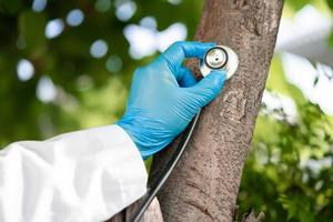 Checking health listening tree nature with stethoscope, photo