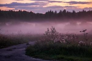 hermosa niebla rosa en el bosque al atardecer foto
