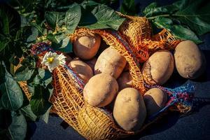 patatas alemanas directamente después de la cosecha foto