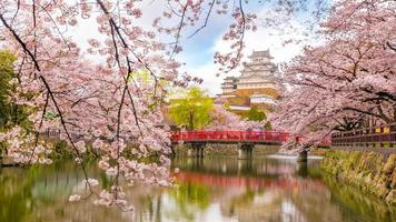Himeji castle with sakura cherry blossom season photo
