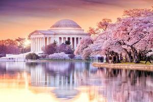 El monumento a Jefferson durante el festival de los cerezos en flor foto