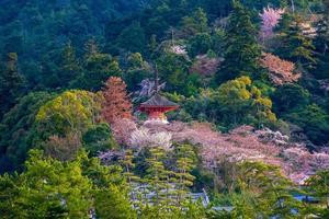Itsukushima Shrine with sakura photo