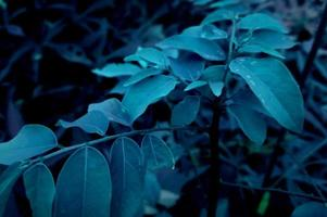 Blue leaves in the cold photo