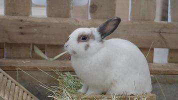 conejo o conejito sentado y jugando en el suelo de la casa. video