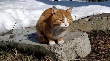 un gato pelirrojo está tomando el sol en un día de invierno. video