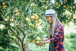 Woman harvesting an orange plantation photo