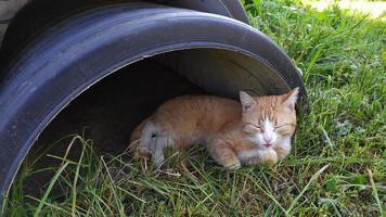 el gato se esconde del sol a la sombra de la chimenea foto