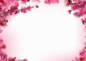 Beautiful spring flowers frame background, Season theme, hello spring photo