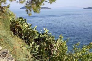 Summer Greek Islands Cactus Plant photo