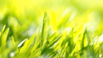 green grass through sunlight photo